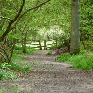 Woodland near the Basingstoke Canal, near Blackbushe Park, Yateley, Hampshire