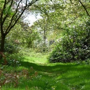 Woodlands near Blackbushe Park, Yateley, Hampshire