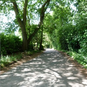 Quiet, secluded approach to Merrywood Park, Box Hill, Surrey